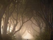 Thornfield Glamping Pods, The Dark Hedges, Ballycastle, Ballymoney