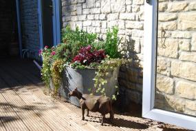 Holiday Home, Fig Cottage, near Bradford on Avon and Bath
